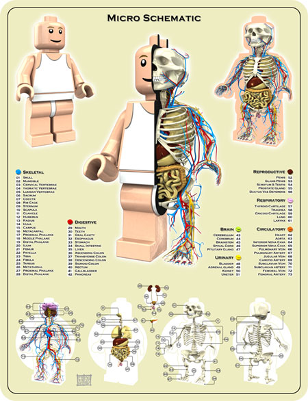 Lego Mini Fig Anatomy by Jason Freeny