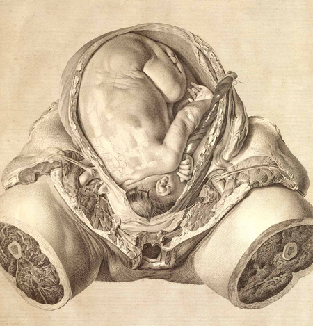 Anatomy of womb